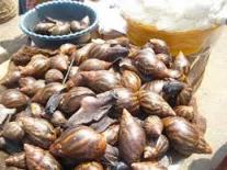 snails makola market accra ghana